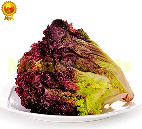 1bag = 100pcs rare gaint américaine RED graines de laitue bonsaï graines délicieux légumes plante cerise maison & jardin livraison gratuite