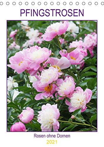 Pfingstrosen Rosen ohne Dornen (Tischkalender 2021 DIN A5 hoch)