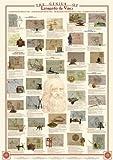 International Publishing - Puzzle Leonardo Tortugas Ninja de 1000 Piezas [Importado de Alemania]