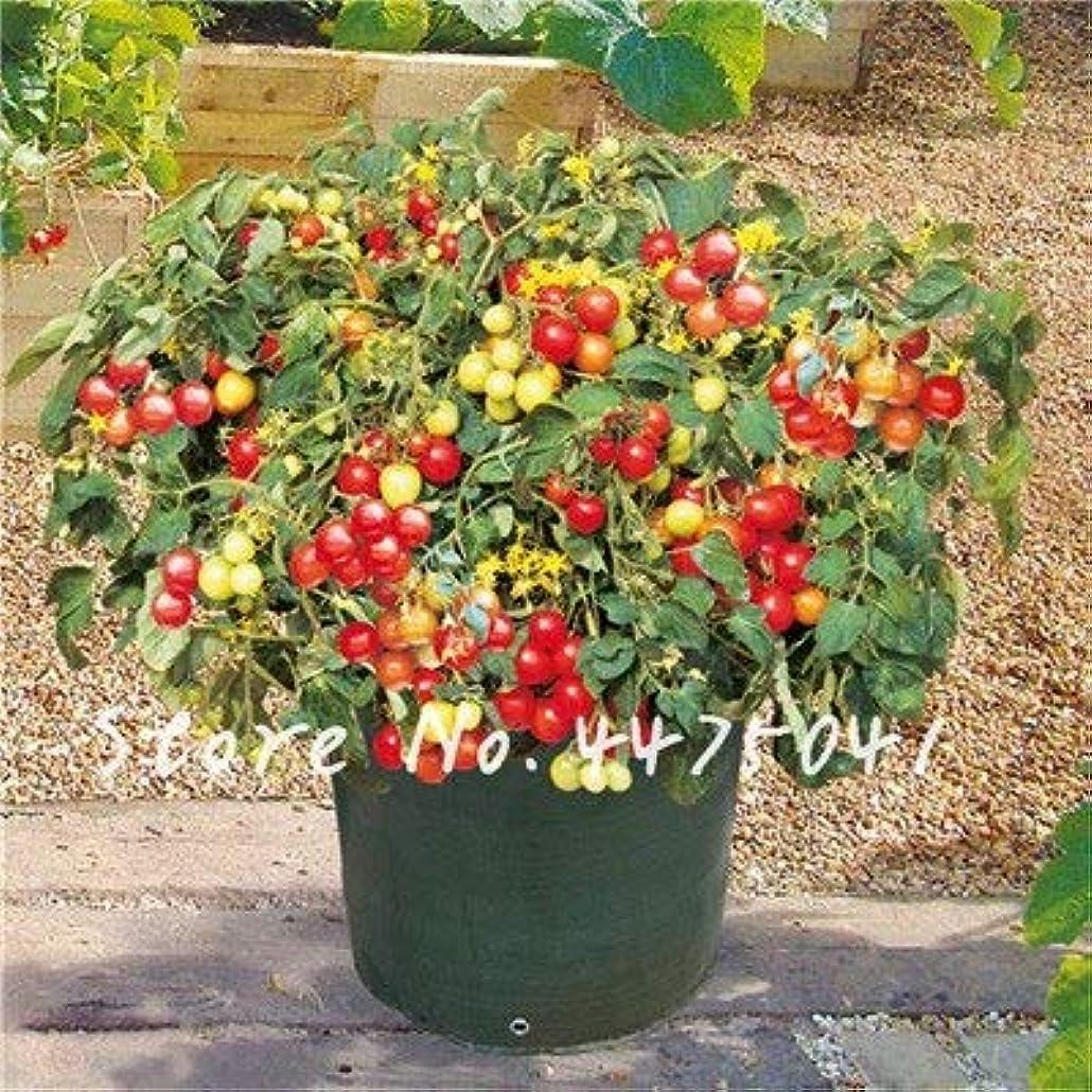 クリップ前方へエピソード新鮮な赤いミニトマト200個健康レッドイエローグリーンチェリーピーチ梨トマト盆栽OrganicForガーデンベジタブル盆栽