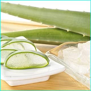 アロエベラ5kg/食用アロエ/食べるアロエ/お刺身、手作り化粧水、アロエヨーグルト等