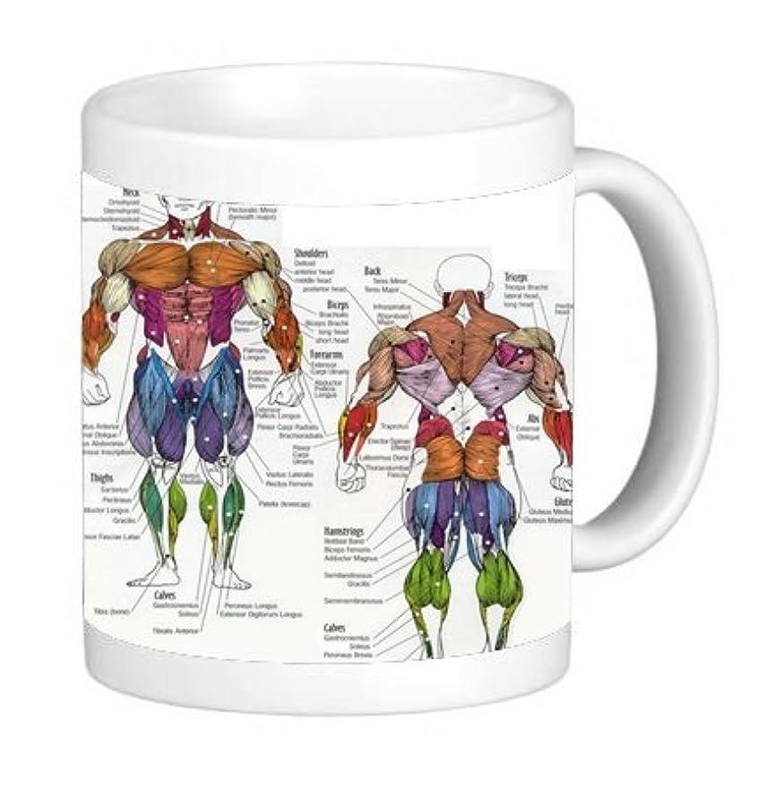 The Human Muscular System 11 Ounce Ceramic Coffee Mug Tea Cup