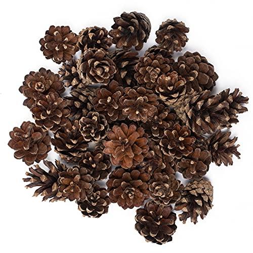 Gardigo Kiefernzapfen Nachfüllpack - Ca. 80 Stück | Füllmaterial für Insektenhotel, Insektenhaus I Zum basteln von Weihnachtsdeko, Herbstdeko