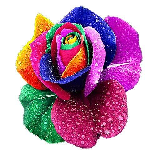 200Pcs Bunte Regenbogen Rose Blumensamen Heim Garten Pflanzen