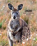 "2020 Weekly & Monthly View Planner: Brown Kangaroo 8""x10"" (20.32cm X 25.4cm) 12-Month Notebook Calendar Schedule Organizer Jan 1, 2020 - Dec 31, 2020 (Beautiful Calendar Books - Wildlife Photography)"