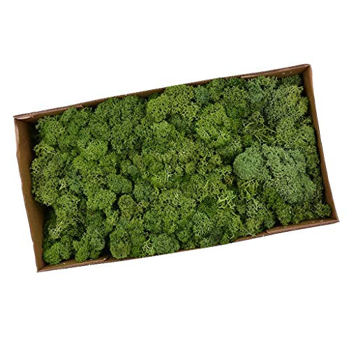 perfeclan Musgo Secado Flor Seca Preservada Decor - Amarillo Verde