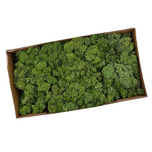 LOVIVER Musgo De Reno Preservado Artificial para Terrarios Jardines De Hadas Artes Y Manualidades 20 Colores - Amarillo Verde