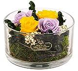 Rosen-Te-Amo, bouquet di 4 rose vere, conservate in vaso rotondo, realizzato a mano con amore con piante decorative 100% e verde legale, viola e giallo