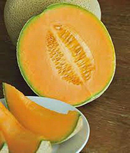 SEED cantaloup, Hales MEILLEUR JUMBO, HEIRLOOM, ORGANIC, NON OGM, 500 graines, MELON