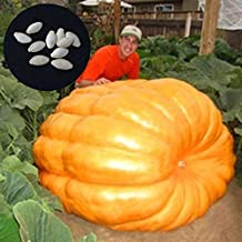 Amazon.es: semillas de calabaza