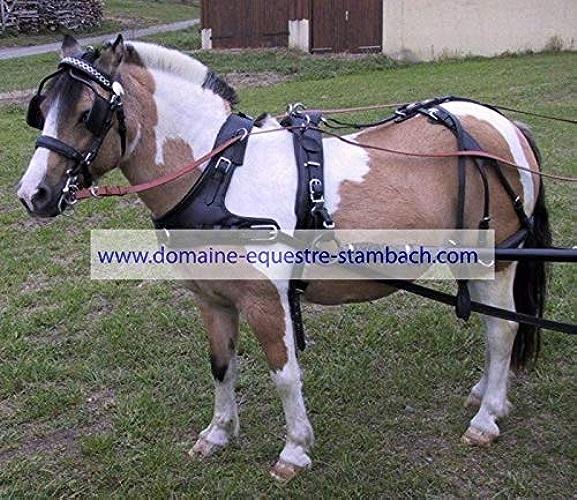 Harnais collier bricole un cheval - shetland, Noir
