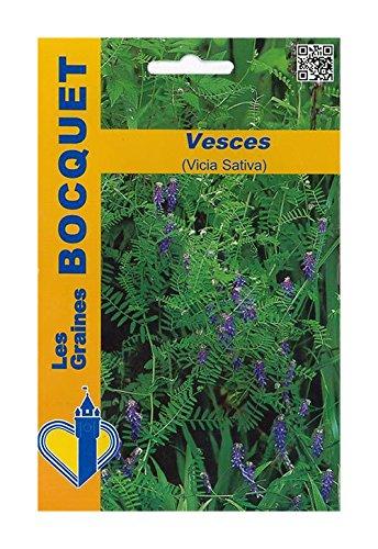 Les Graines Bocquet - Graines De Vesces (Vicia Sativa) Pour 10M² - Graines Potagères À Semer - Sachet De 100Grammes