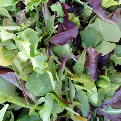 Fitness pur Pflücksalat, Babyleaf Salat, Baby Leaf Mischung, 100% Natursamen mehr als 1000 Samen