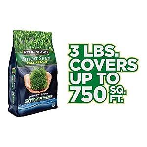 Pennington Smart Seed Tall Fescue Grass Seed, 3 lb