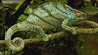 3Dパズル-建物-500個動物の爬虫類の写真クリスマスプレゼント52x38cm