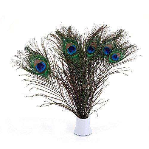 PACOLO Echte soziale Pfauenfedern, 25–30 cm, tolle Dekoration für Hochzeit, Weihnachten, Halloween, Haus (10 Stück natürlich)