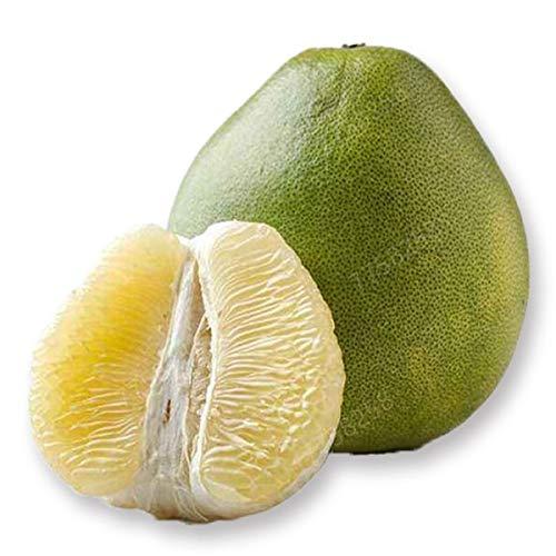 GETSO 5pcs de Sac Hardy Mini Pummello Pomelo Arbre Nain kao Pan Pamplemousse! Plante Rare Bonsai Fruit pour la Livraison Gratuite de Jardin à Domicile: 4