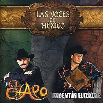 Las Voces De México