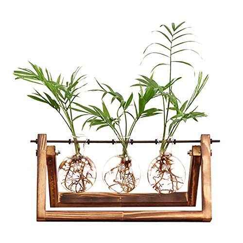 Ivolador Desktop Glass Plants Bulb Terrarium with Retro Solid Wooden Stand and Metal Swivel Holder for Hydroponics Plants Home Garden Wedding Decor (3 Bulb Vase)
