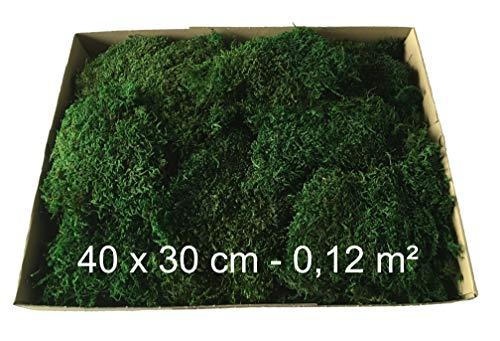 Decoflorales® - Konserviertes Moos, Plattenmoos, Flachmoos, Naturmoos, Dekomoos - 40 x 30 cm - 0,12m²