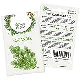OwnGrown Premium Koriander Samen (Coriandrum sativum), Koriandersamen einjährig zum Pflanzen, Saatgut für rund 120...