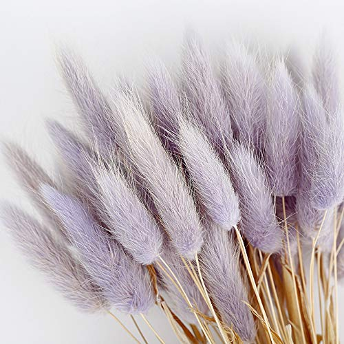 BRXY 50PCS Home Decoration Lagurus Ovatus Rabbit Tail Dried Flowers, Real Flower, Eternal Flower Dried Grass,Flower Bouquet, Photo Props Home Party and Wedding Decor (Purple)