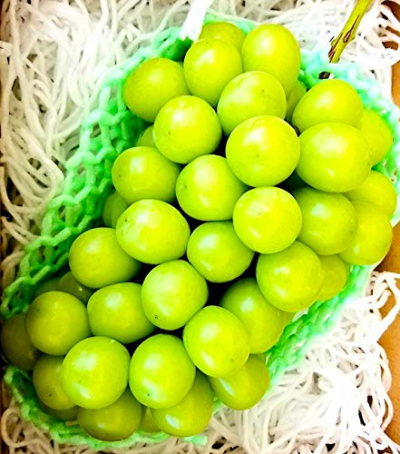 山梨県産 シャインマスカット 900g - 1,200g 糖度:19度 - 20度 超大玉 秀品 ぶどう ギフト お中元 化粧箱 ブドウ 朝摘みを当日発送(産直) 9/5より土日祝含む毎日出荷