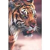 ダイヤモンドペインティングタイガーフルスクエアダイヤモンド刺繡ラインストーンの動物写真ダイヤモンドモザイクドロップシップ(40X50CM)