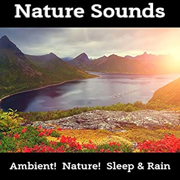 Best Collection of Nature Sounds, Forest, Birds, Rain, Ocean for Relaxation