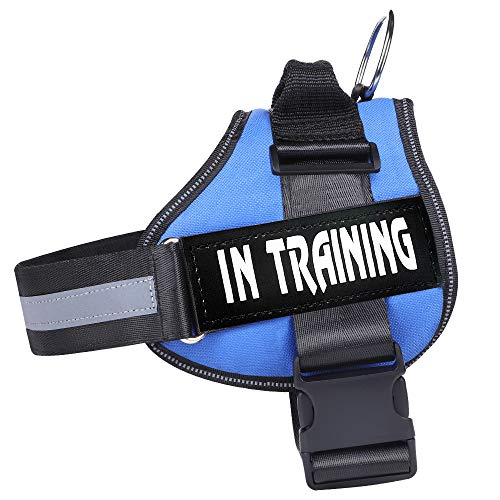 Dog in Training Harness