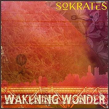 Wakening Wonder
