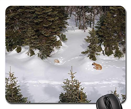Gaming-Mauspads, Mauspad, Snow Dogs Winter Animal Nature