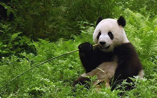GAGALAM Puzzle Clásico De Madera Adulto 1000 Piezas Animal Comiendo Panda Gigante.La Mejor Opción para Regalar Y Descomprimir.