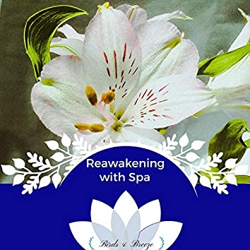 Reawakening With Spa