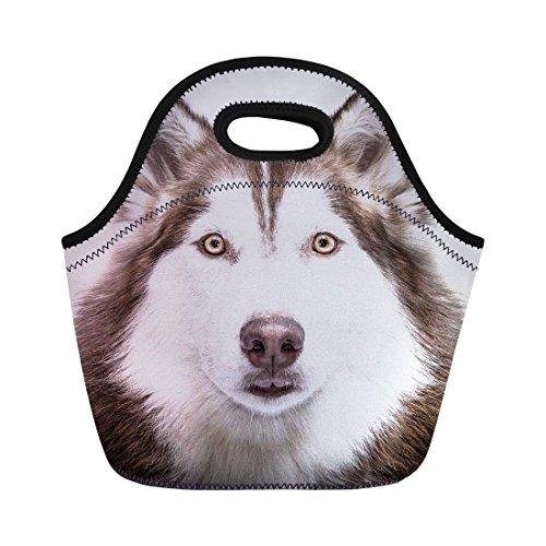 Nopersonality Sac à lunch pour femmes d'école enfants filles récipient de transport Sac à main, Dog Pattern-10, Taille M