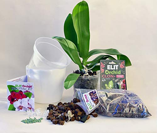 Orchid repotting kit - 6 inch pots with Potting Mix, Fertilizer and cytokinine Paste