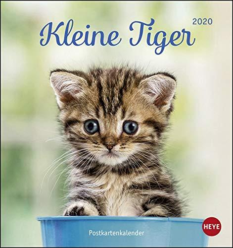 Katzen Postkartenkalender Kleine Tiger. Postkartenkalender 2020. Monatskalendarium. Spiralbindung. Format 16 x 17 cm