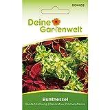 Buntnessel bunte Mischung | Coleus blumei | Samen für...