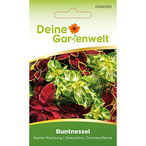 Buntnessel bunte Mischung | Coleus blumei | Samen für Zimmerpflanzen | Samen für Topfpflanzen