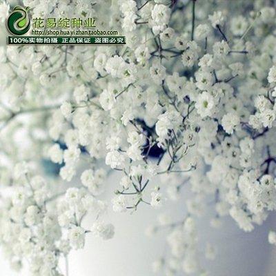 Vert: Starry Graines de fleurs dans les types et les saisons d'hiver printemps de forfaits d'intérieur Plante en pot Graines facile à vivre 50 graines