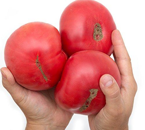 RWS Graines de tomate géante rose 10 BIO, juteuse, sucrée, fruits 400-500