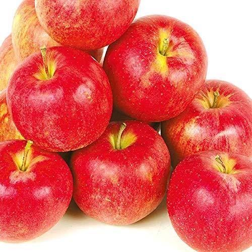 国華園 食品 青森産 ジョナゴールド 5�s1箱 りんご