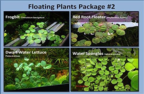 G & Z Aquarium Floating Plants Package #2, 12 Amazon Frogbit, 12 Dwarf Water Lettuce, 12 Water Spangles, 12 Red Root Floater