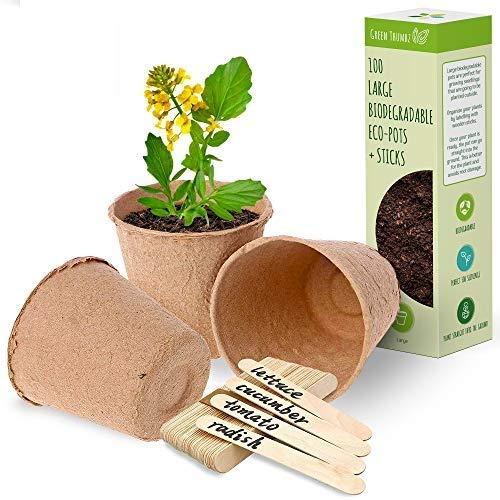 Green Thumbz Pots de Fibres Rondes biodégradables pour semis, Grands Pots en Fibre, Pots pour Fleurs, Plantes et graines d'intérieur ou d'extérieur avec des bâtonnets en Bois - (Lot de 100)