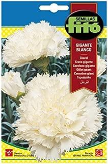 Amazon.es: Almacenes Iberia s.l - Semillas / Plantas, semillas y ...