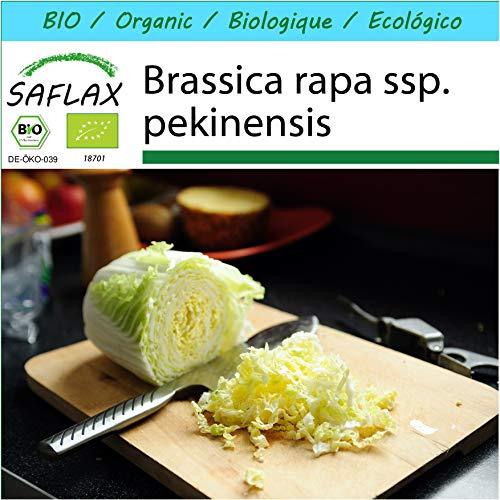 SAFLAX - Geschenk Set - BIO - Chinakohl - Granat - 40 Samen - Mit Geschenk- / Versandbox, Versandaufkleber, Geschenkkarte und Anzuchtsubstrat - Brassica rapa