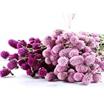 vicky-handmade-globe-amaranth-dried-flower-party-home-decor-2-branchesbundles-naturally-dried-dried-flower-pink-purple-whitestyle-01