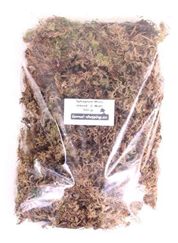 Sphagnum Moos - Lebend 500 gr. - 2. Wahl