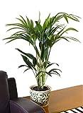 botanicly Indoor Plants
