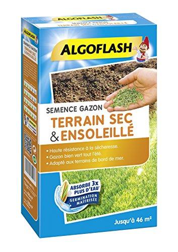 puissant ALGOFLASH graines de gazon sec sol ensoleillé, 1 kg, SEMSOL1